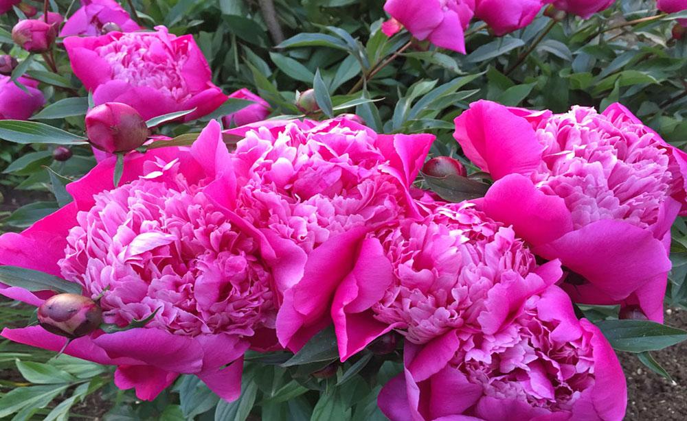 La Roseraie 80 lieu de séminaires et réceptions parc et fleurs