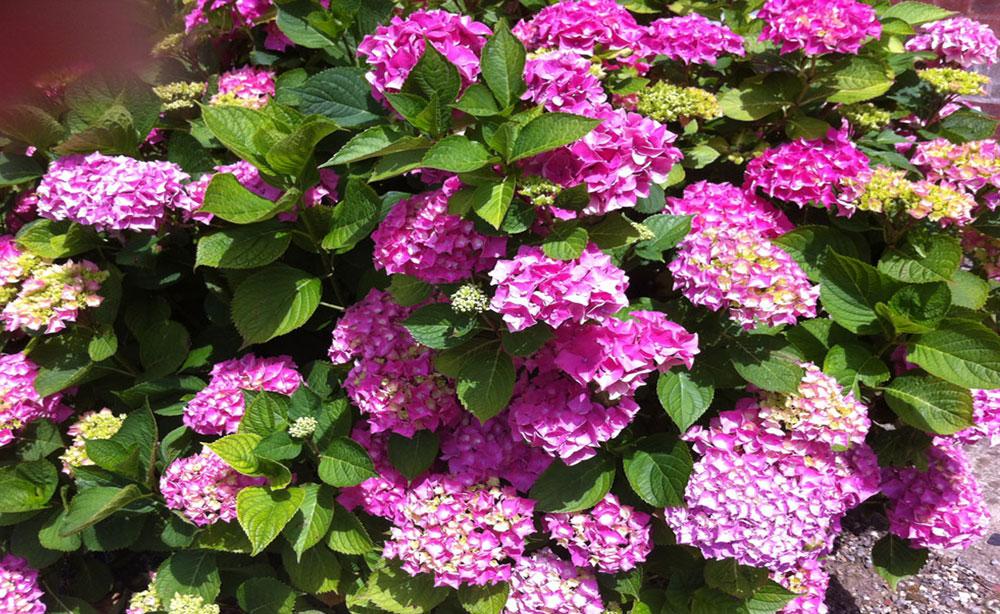La Roseraie 80 Séminaires et Réceptions privées parc en fleur
