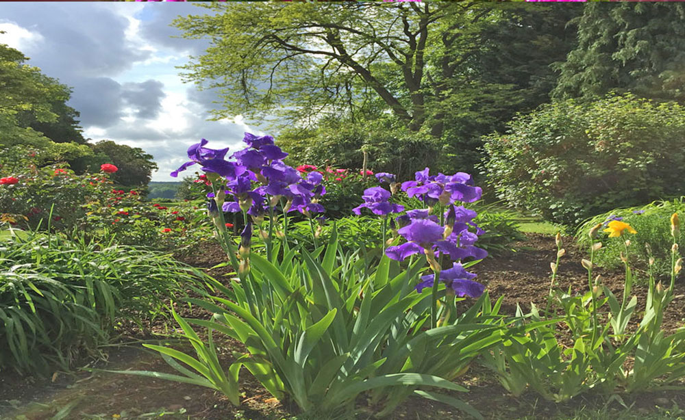 La Roseraie 80 séminaire et réception vue sur le parc en fleurs