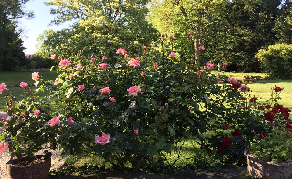 La Roseraie 80 - séminaire et réception extérieur vue sur la terrasse parc