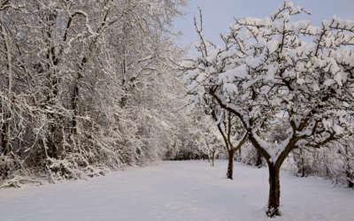 La neige nous offre des paysages magiques …